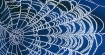Web Frost