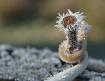 frosty nail