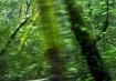 Green 1a