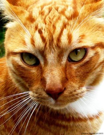 Portrait of Tigger
