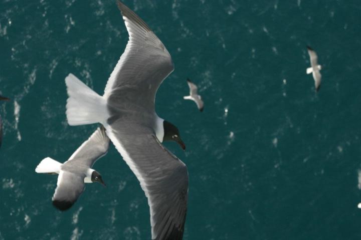 Gulls at St Thomas