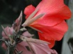 A Glassic Flower