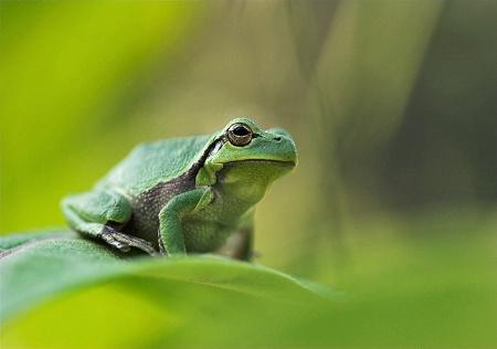 Green Sight
