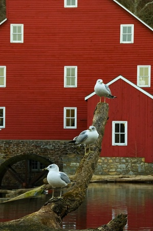 Birds By the Mill