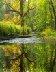 Silk Creek Reflec...