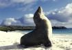 Sea Lion sunbathi...