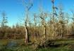 Cypress Bayou