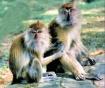 Monkey Pair