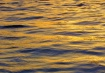 Gold on the Water