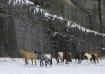 Wild Horses in th...