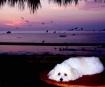 Napping at Sunset