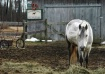 A Horse's Lif...