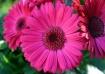Flower 2488
