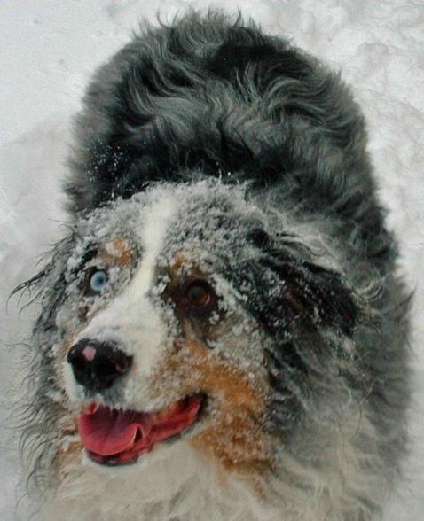 Lucas the snow dog - ID: 1844282 © Sibylle Basel