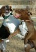 ~Dog Play~