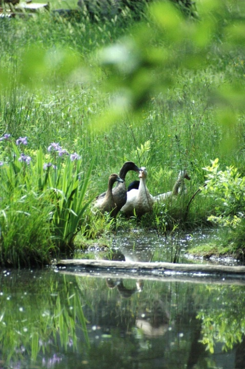 Harrison's Geese   WL 219 - ID: 1917476 © Beth E. Higgins