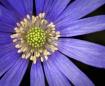 Radiant Flora