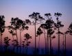 Everglades Sunris...