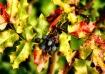 Berries in the Li...