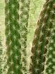Desert Spikes