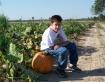 Pumpkin by the ro...