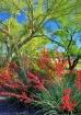 Phoenix Spring Co...
