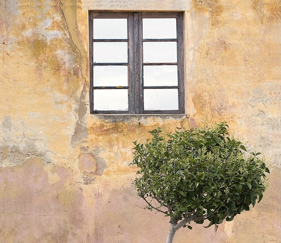 An window, a little tree and...the mur
