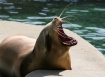 """Beverly """"Seal..."""