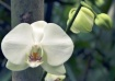 White form Phalen...