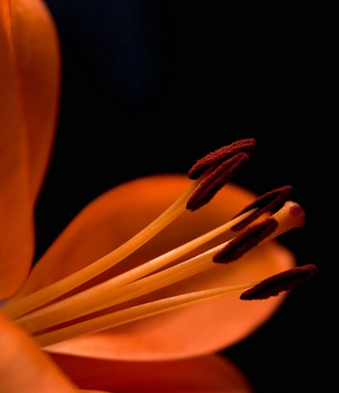 Prime Bloom