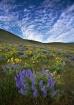 Wildflower Vortex