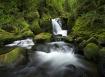 Mossy Falls