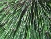 Bamboo Babies