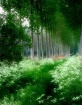 Radiant Green