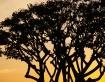 Sunset of San Die...