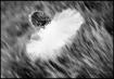 ~~Flying Angel~~