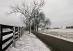 Snow on Bluegrass