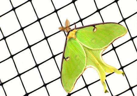 Bug Screen