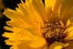 Meadowlark Botani...