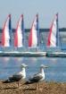 2-C-Gulls
