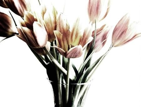 bouquet of tulips~