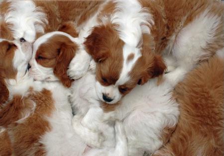 """""""Mess O Puppies"""""""