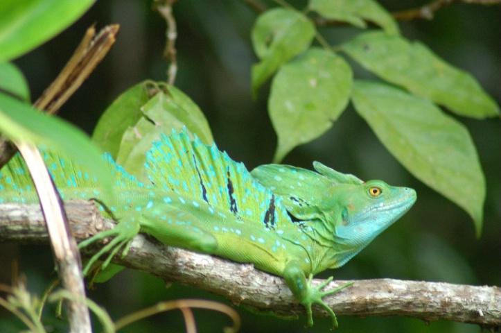 Costa Rica - ID: 2295983 © Larry Heyert