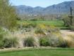 Mesa Az golf