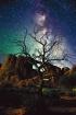 Lone Tree in Utah