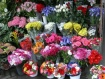 Flower vendor in ...