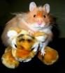 Hamster vs.Tiger....