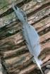 Heron Feather
