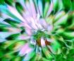 Flower From Mars!