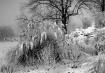 Garden in winter ...